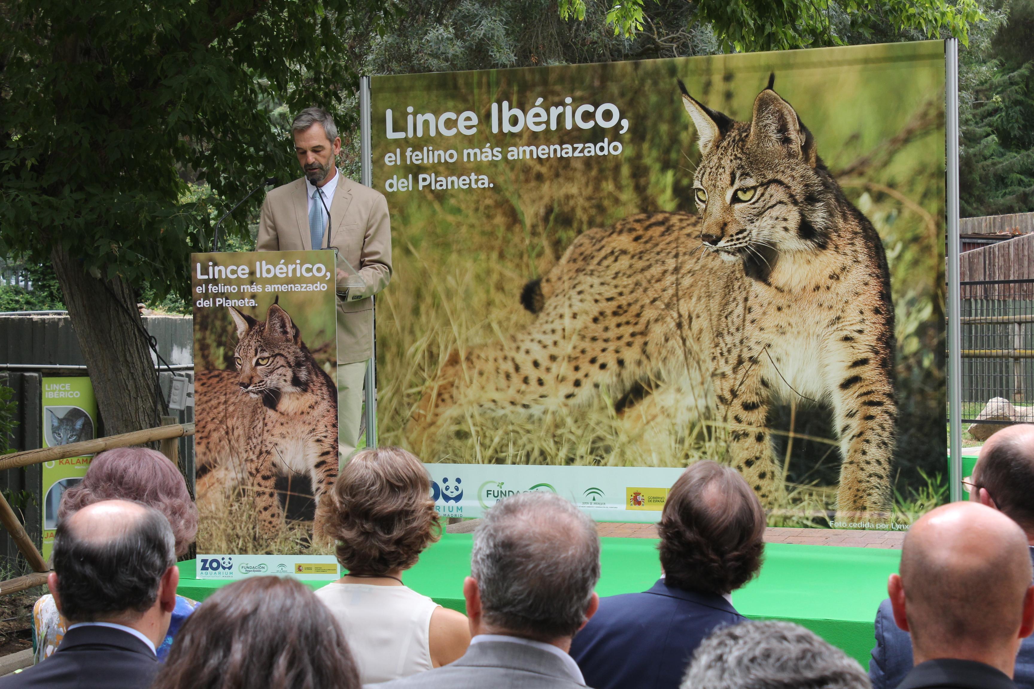 zoo-aquarium-madrid-evento-lince-iberico4_tcm7-427446