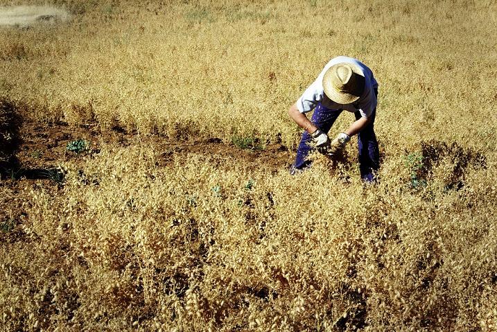 Caja Rural del Sur pone a disposición de sus clientes técnicos para la tramitación de las ayudas