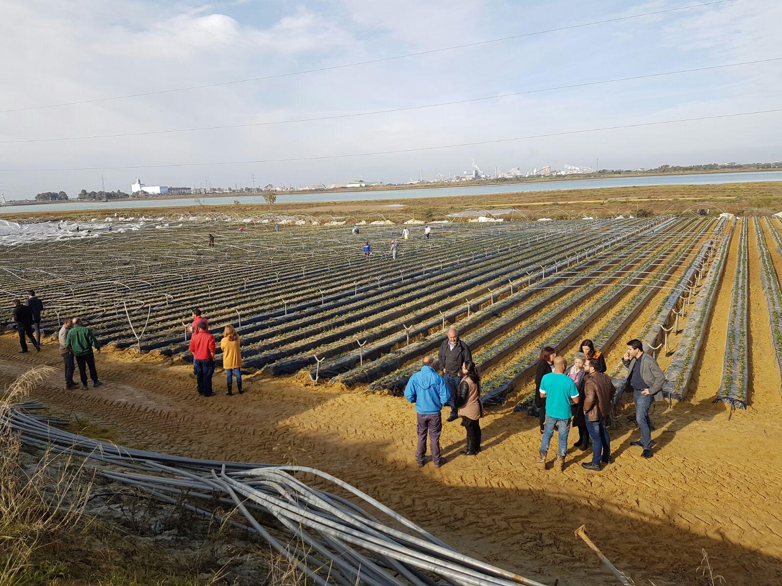 Esta mañana ya se estaban evaluando los daños en las plantaciones de frutos rojos