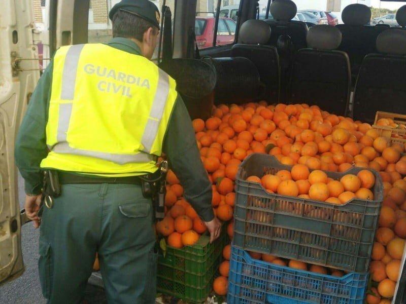 Entre lo incautado, fresas, mandarinas y naranjas...