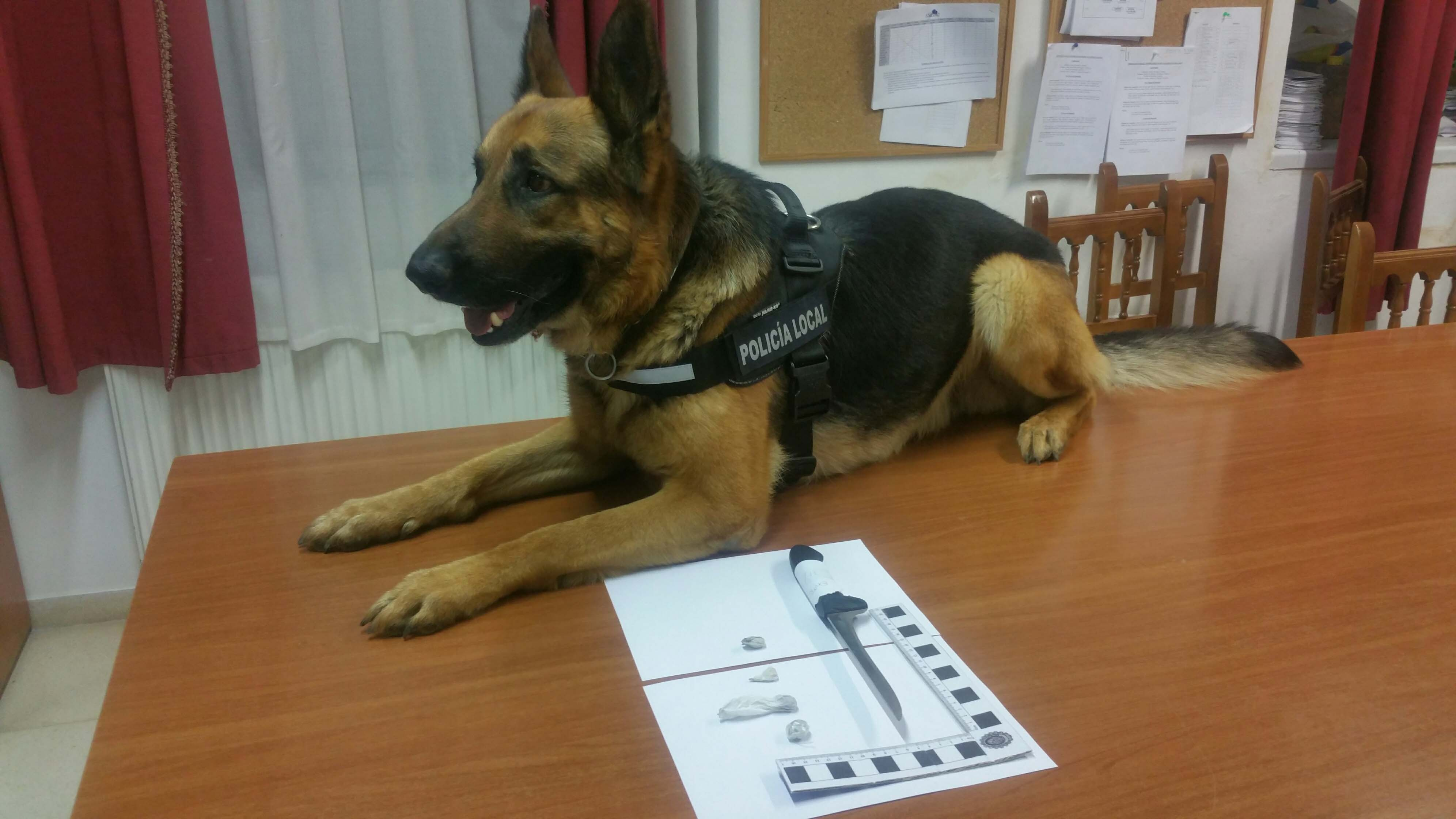 Perro de la policía Local de Aracena