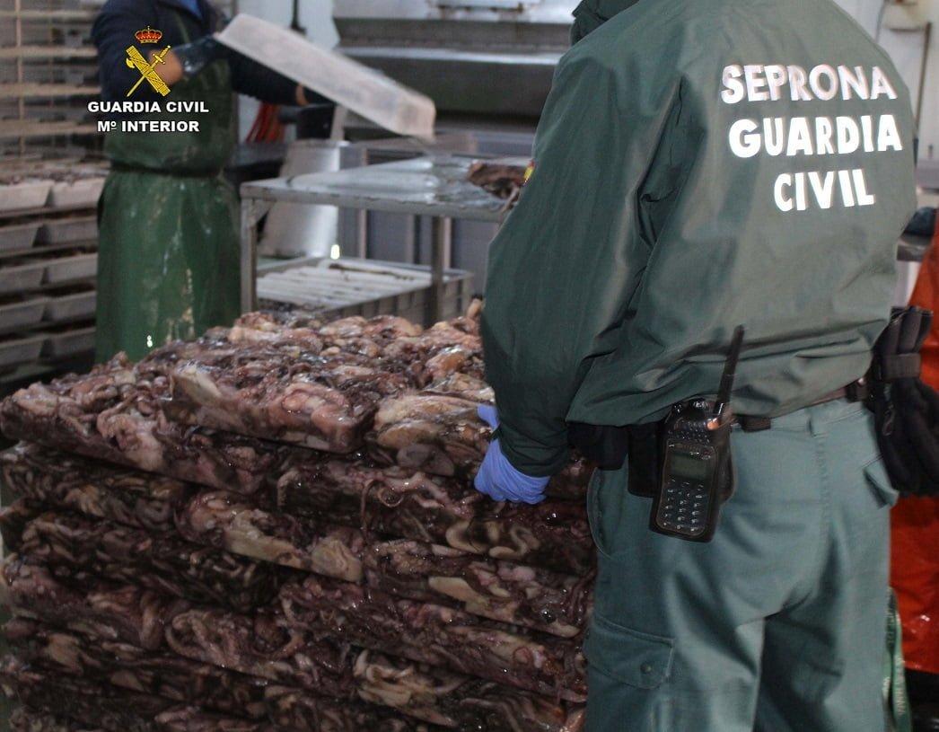 Un total de 5.733 Kg. de pulpo han sido decomisados en una nave de Ayamonte